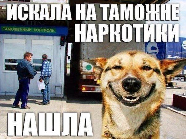 смешные приколы фото картинки очень смешные картинки фото