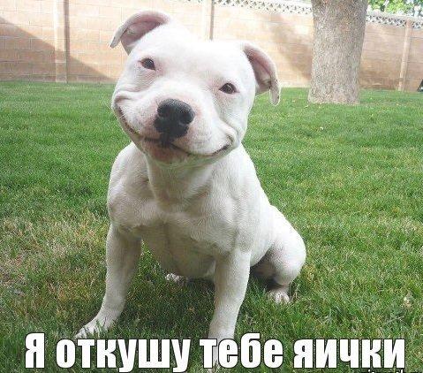 очень смешные картинки и фото фото приколы картинки смешные