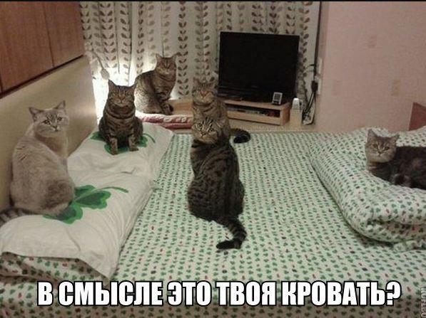 картинки смешные прикольные с надписями фото