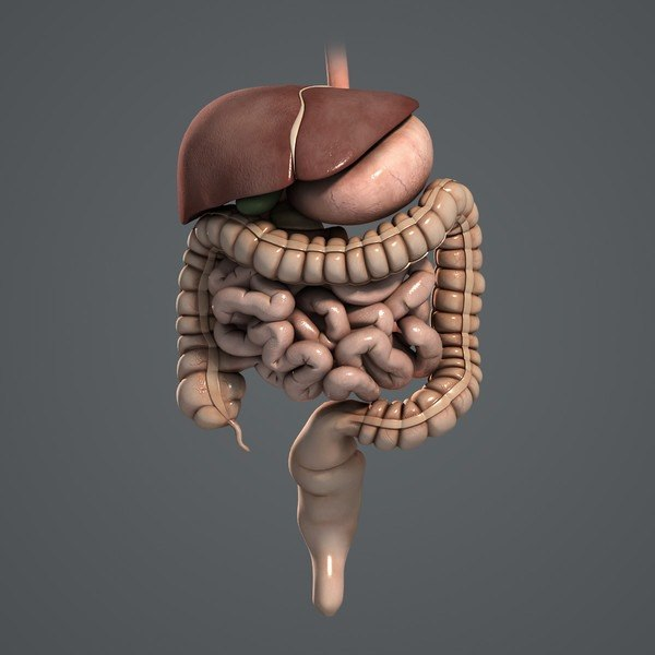 Процесс пищеварение человека. Как это происходит