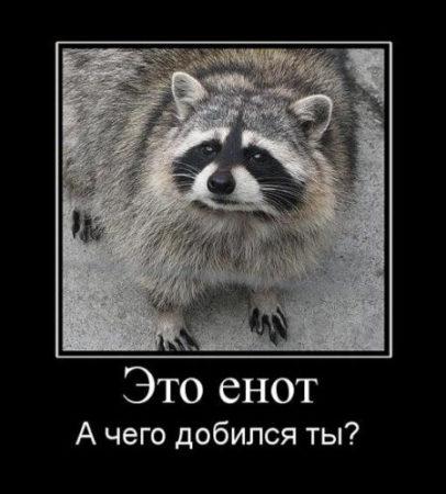 картинки с животными прикольные хорошего качества