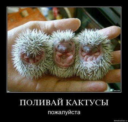 фото приколы бесплатно смешные картинки с надписями до слез