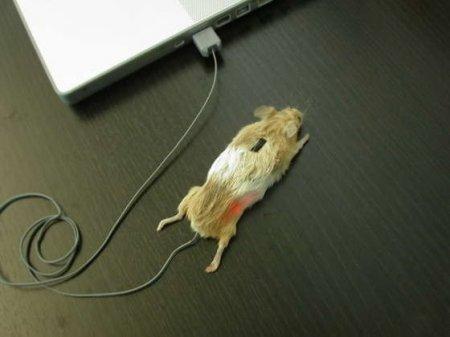 мышка смех и грех