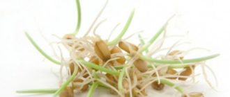 пророщенные семена польза,польза вред пророщенных семян