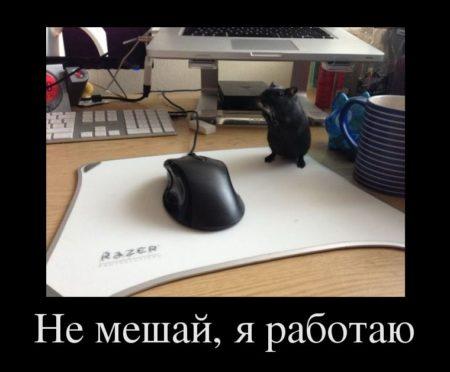 фото смешные кошки и котята и коты до слёз с надписями