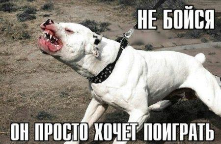 картинки приколы про собак с надписями