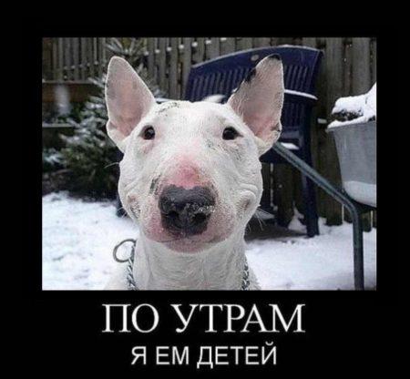 фото приколы картинки с надписями на русском