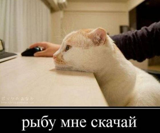 фото приколы смешные до слез очень новые