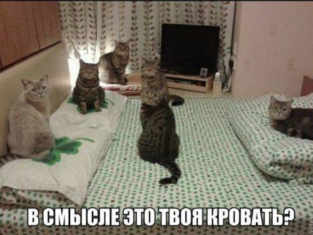 картинки смешные