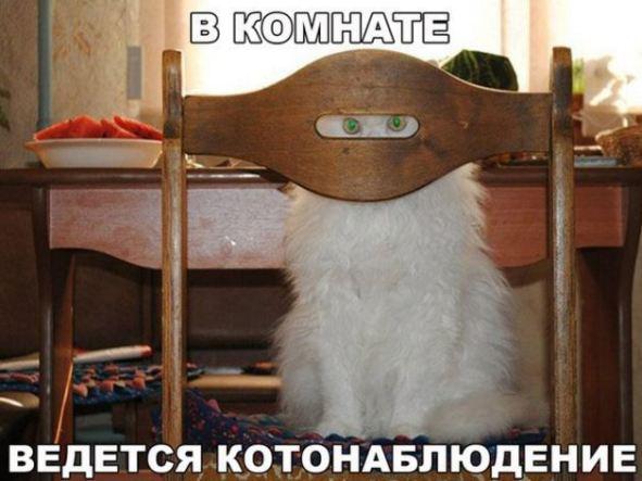 картинная с котиками