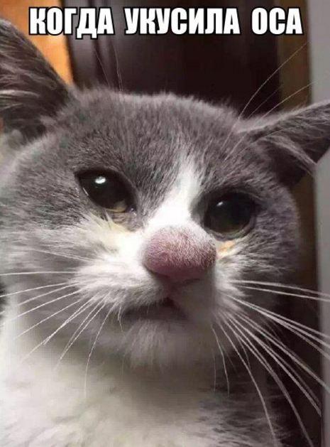 фото смешные про котов