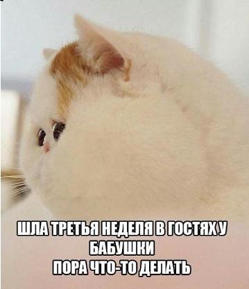 позитивные фото с котами для поднятия настроения