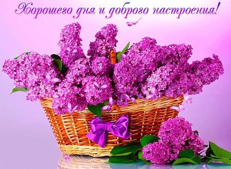открытки добрый день красивой милой женщине в возрасте