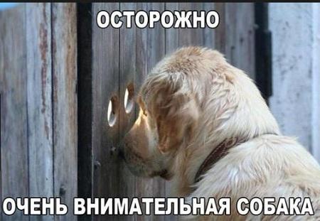 фото приколы смешные до слез очень новые животные