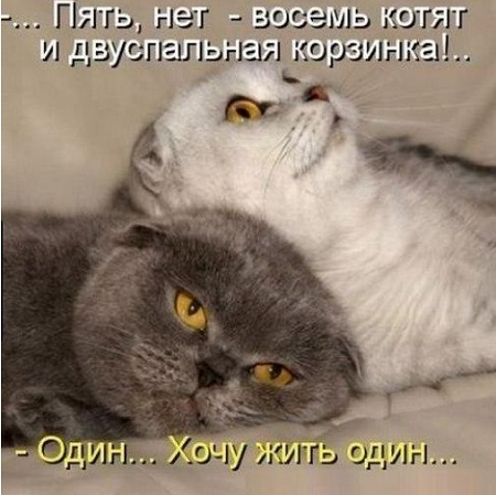 позитивные картинки кошки