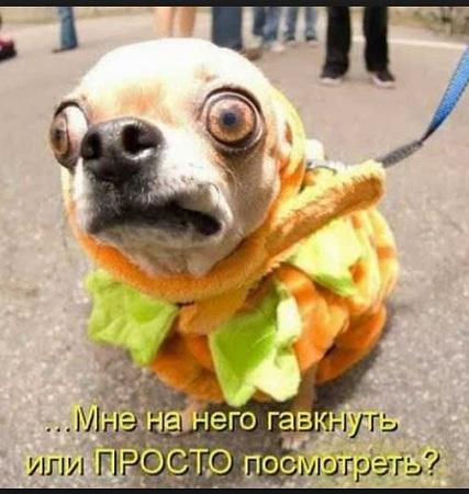 самые смешные картинки и фото с надписями смешно до слез животные новые
