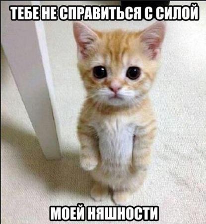 смешные кошки фото с надписями до слёз для поднятия настроения