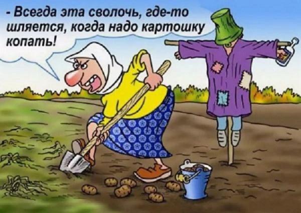 анекдот про огород смешной