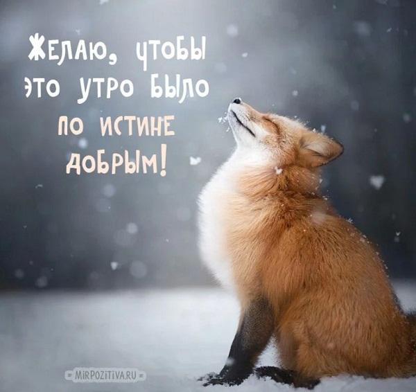 Пожелания доброго зимнего дня и хорошего настроения РФ