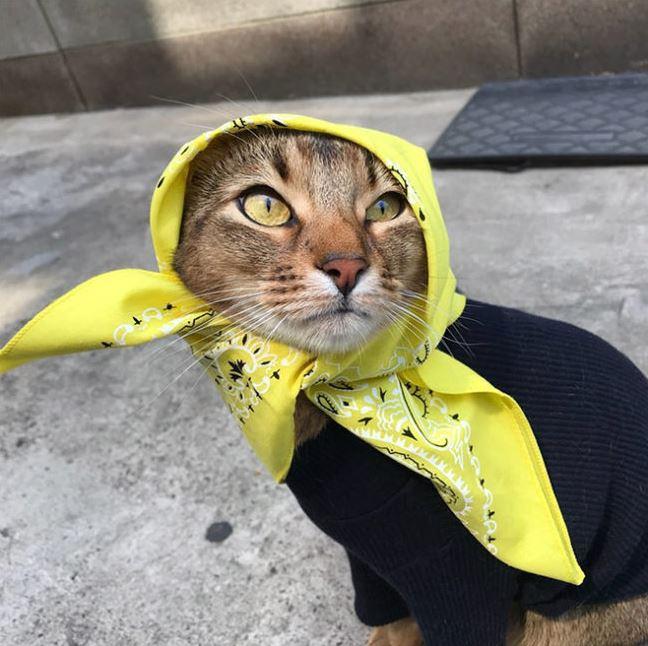 бабушкины кошки