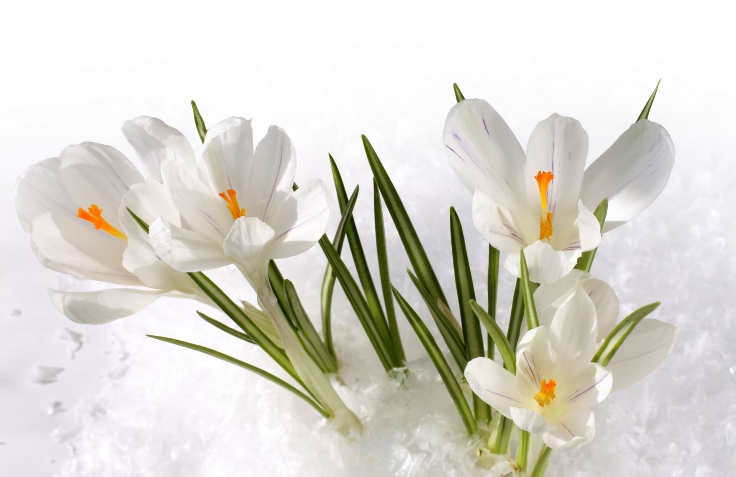 картинки весна природа (10)