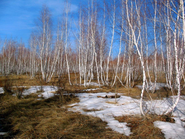 картинки весна природа (11)