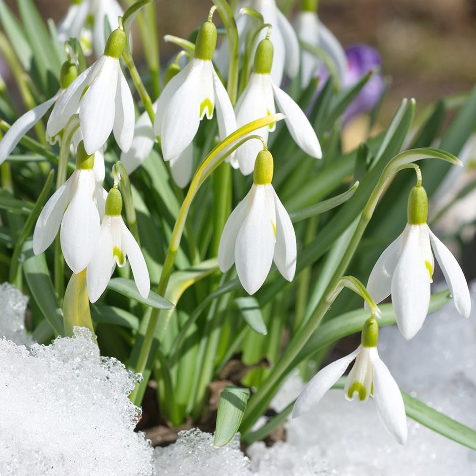 картинки весна природа (12)