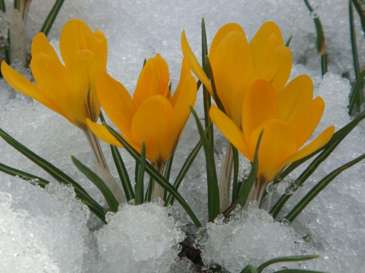 картинки весна природа (13)