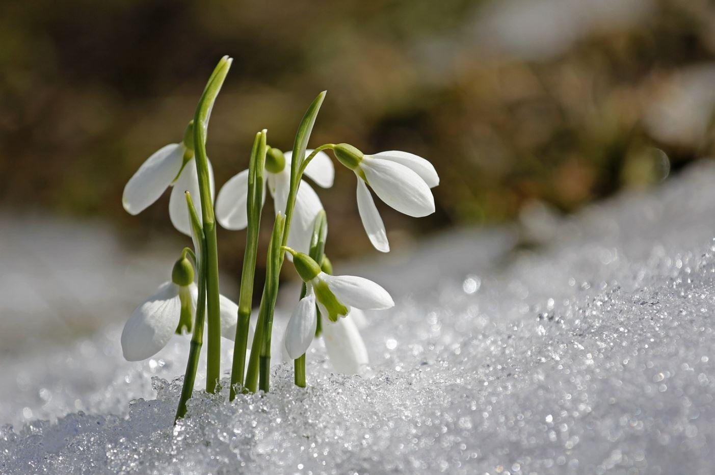 картинки весна природа (14)