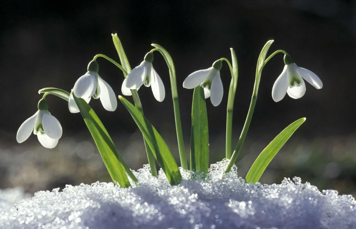 картинки весна природа (15)