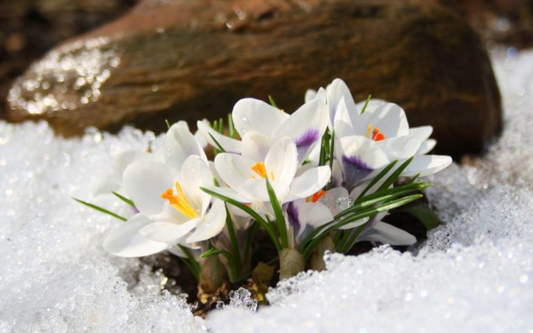 картинки весна природа (16)