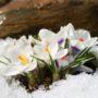 Смотрите красивые картинки весенней природы; фото весна заставка на весь экран