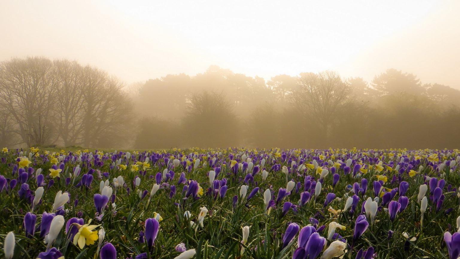 картинки весна природа (18)