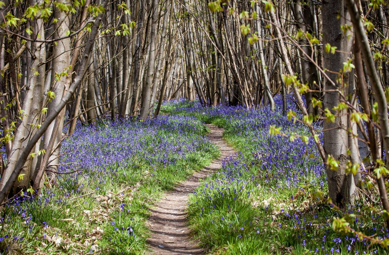 картинки весна природа (19)