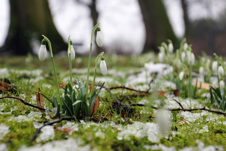 картинки весна природа (2)