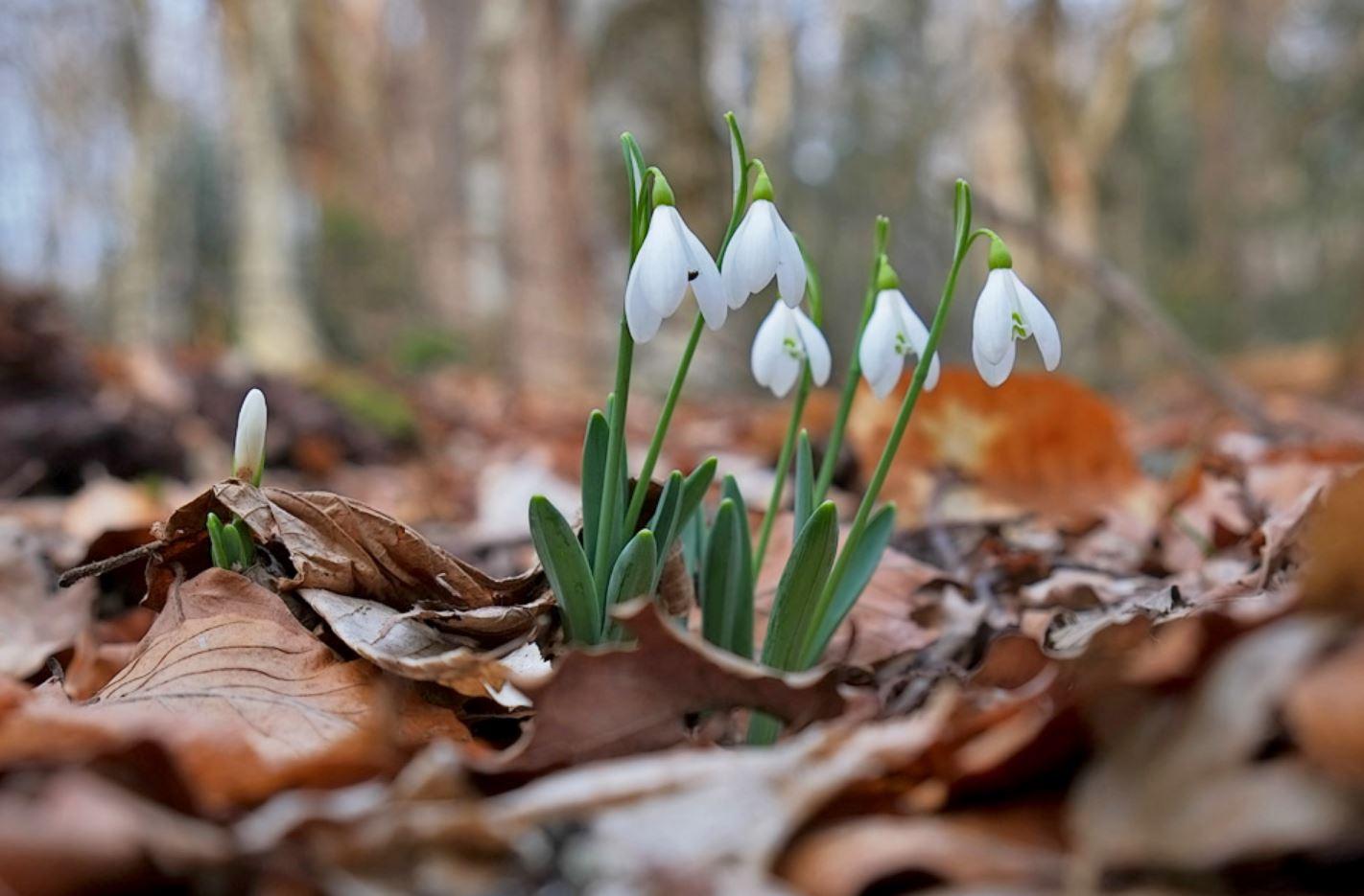картинки весна природа (20)