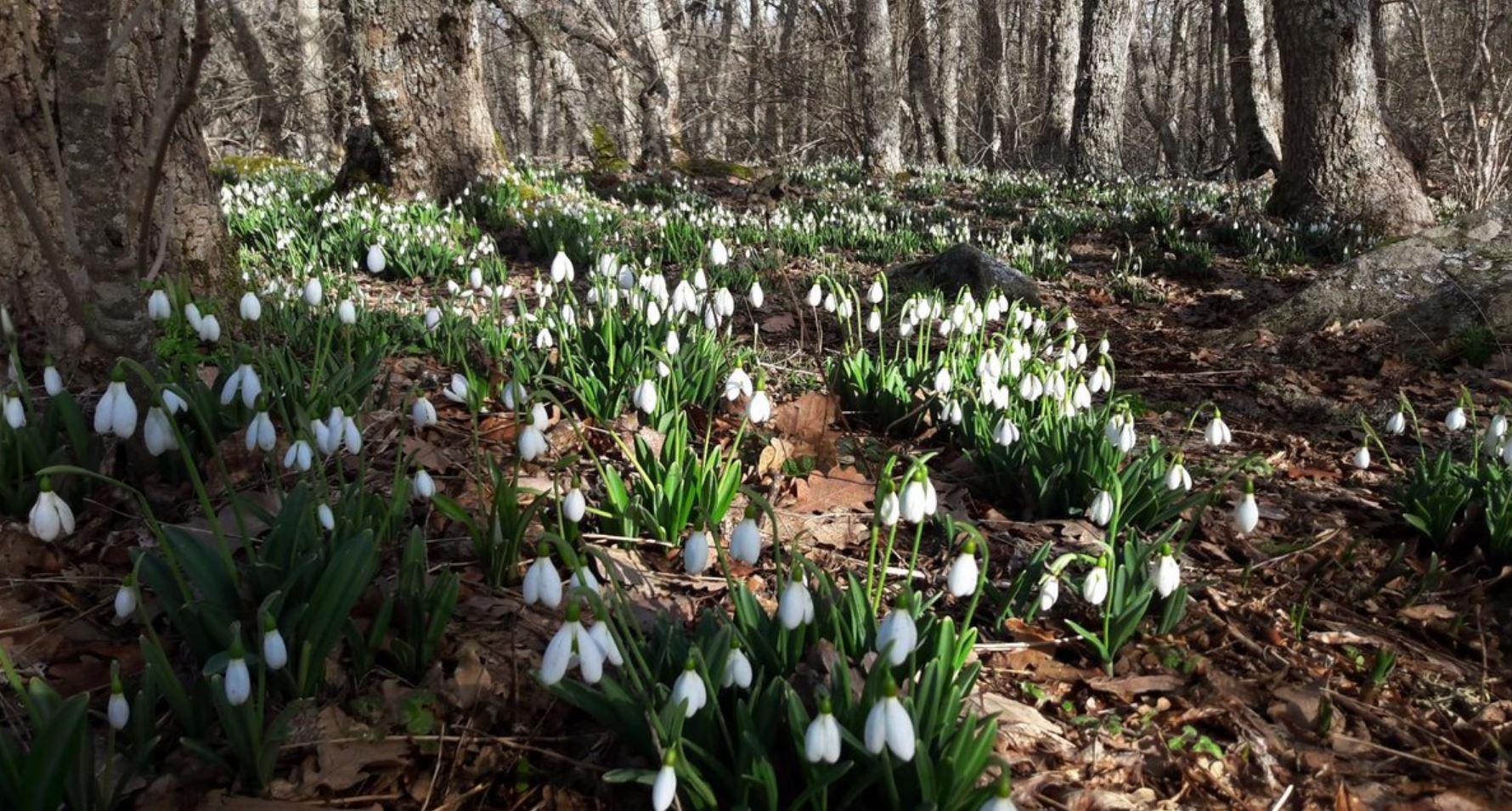картинки весна природа (21)