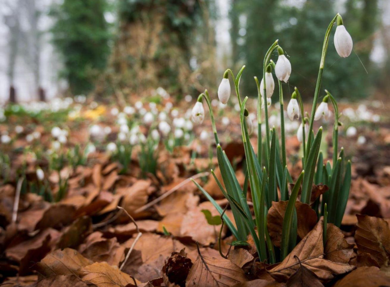 картинки весна природа (22)