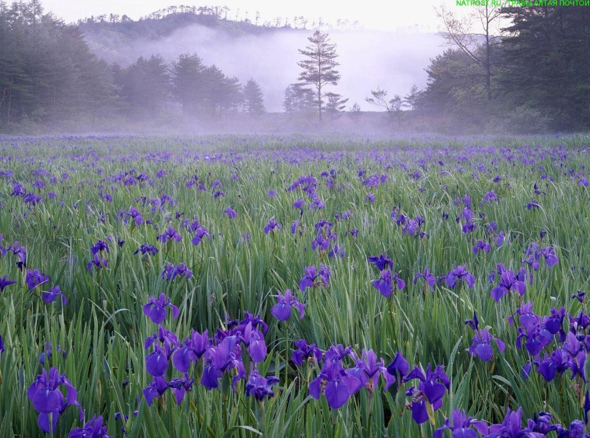 картинки весна природа (23)