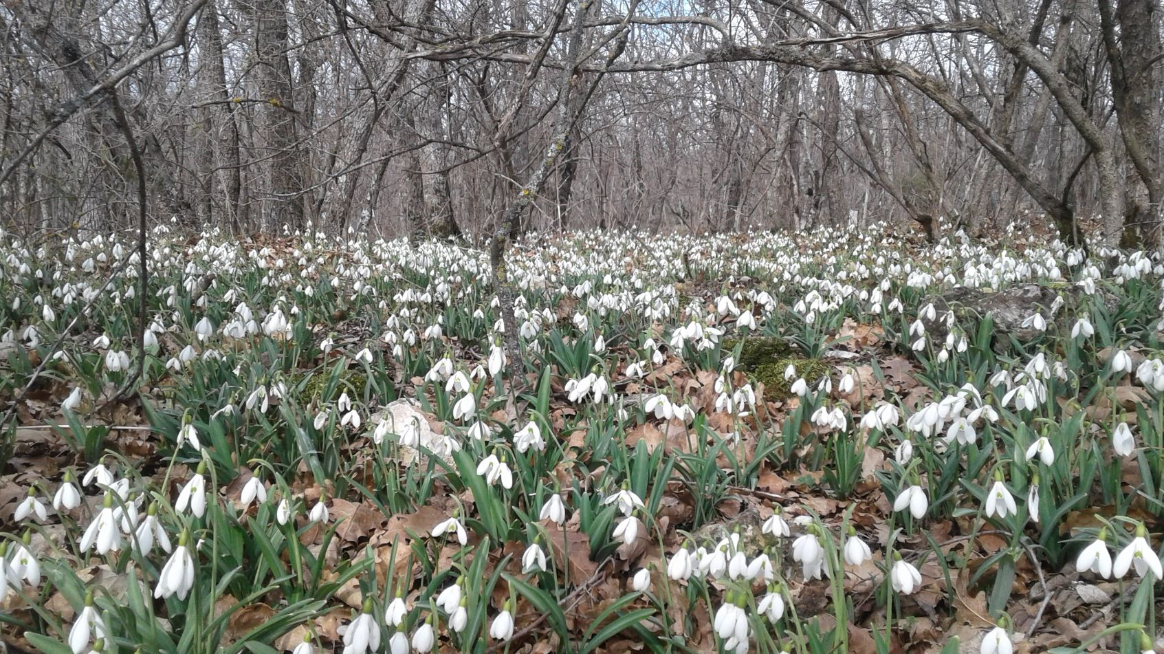 картинки весна природа (24)