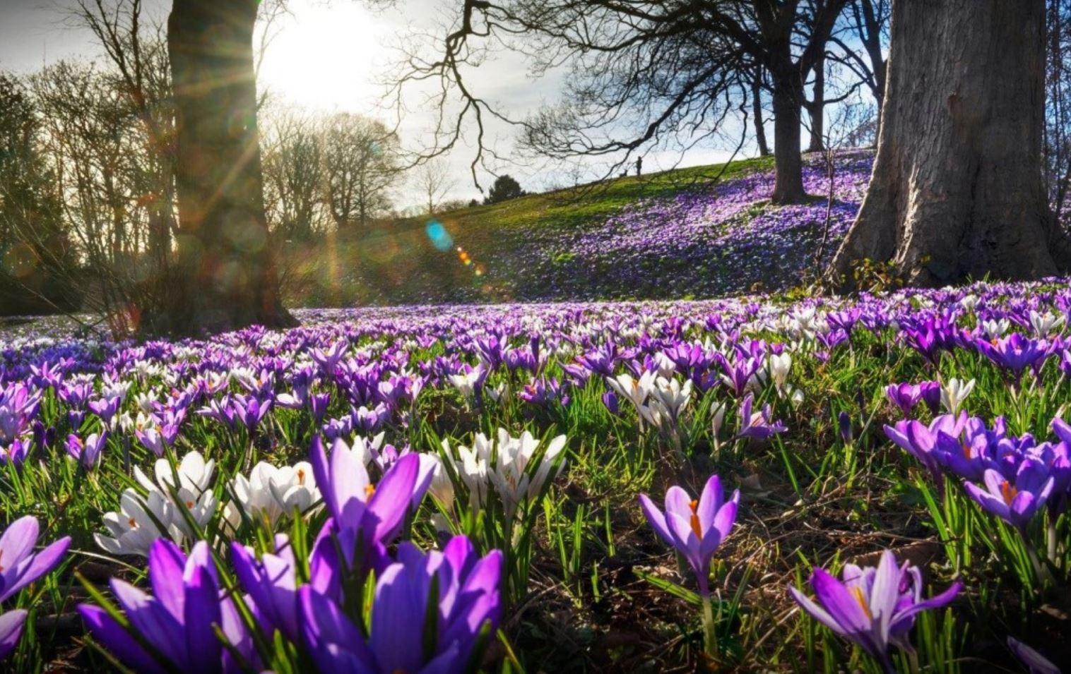 картинки весна природа (25)