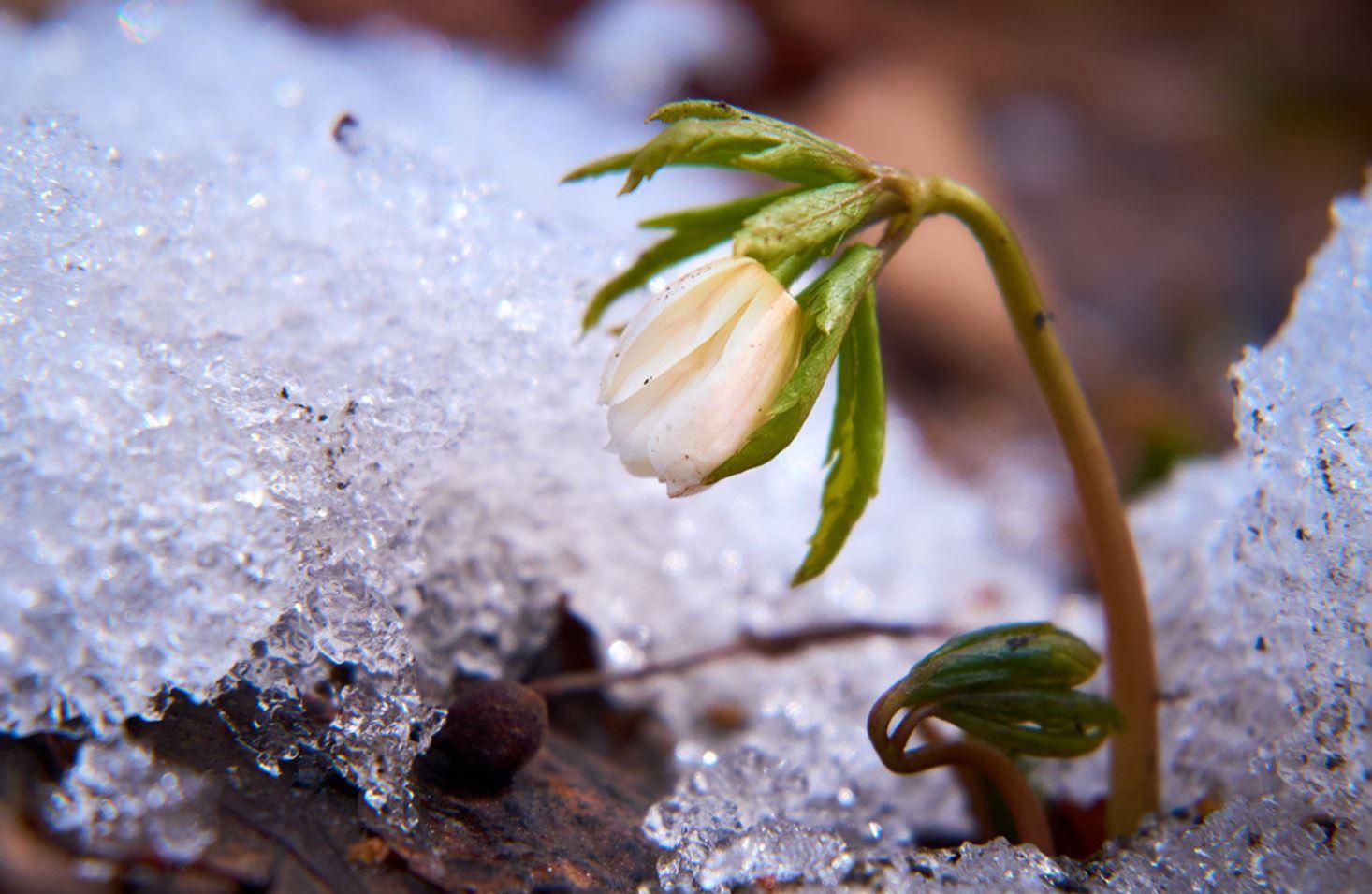 картинки весна природа (4)
