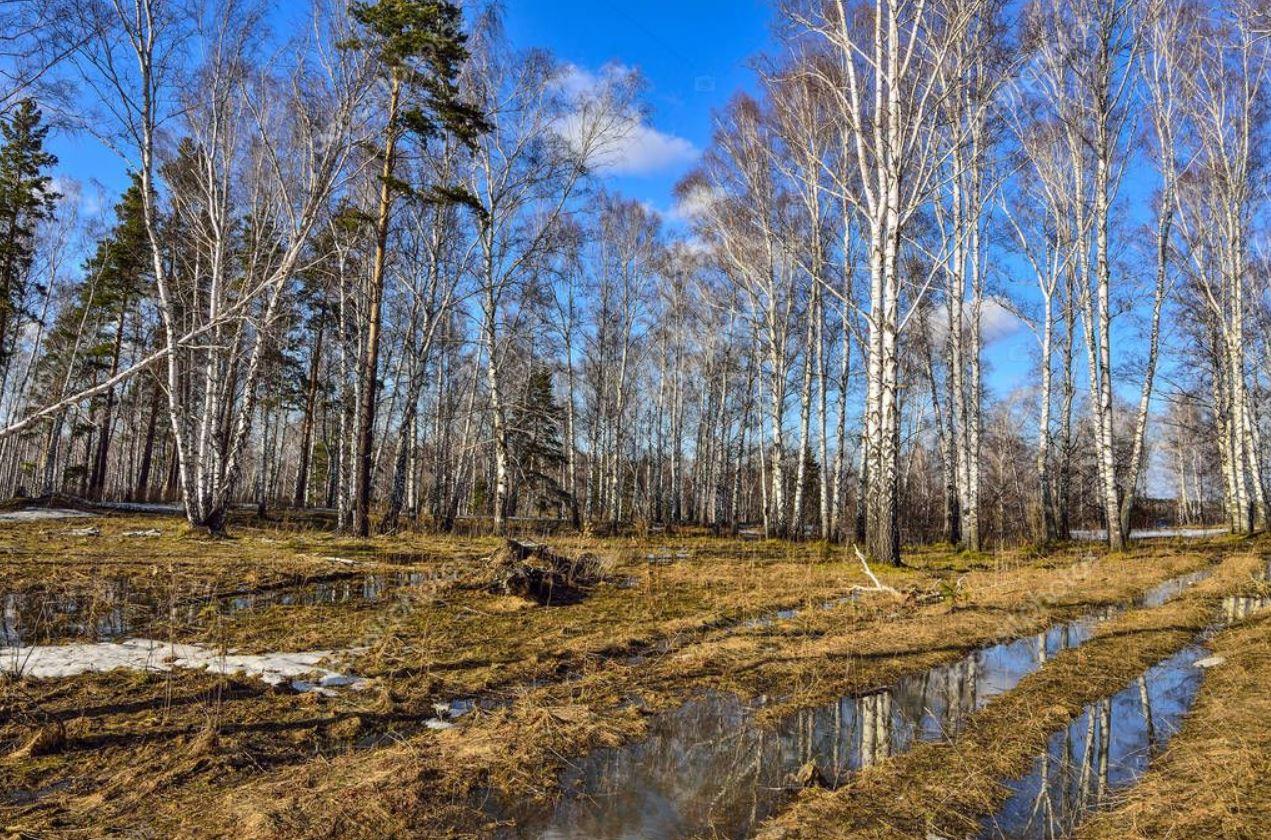 картинки весна природа (5)