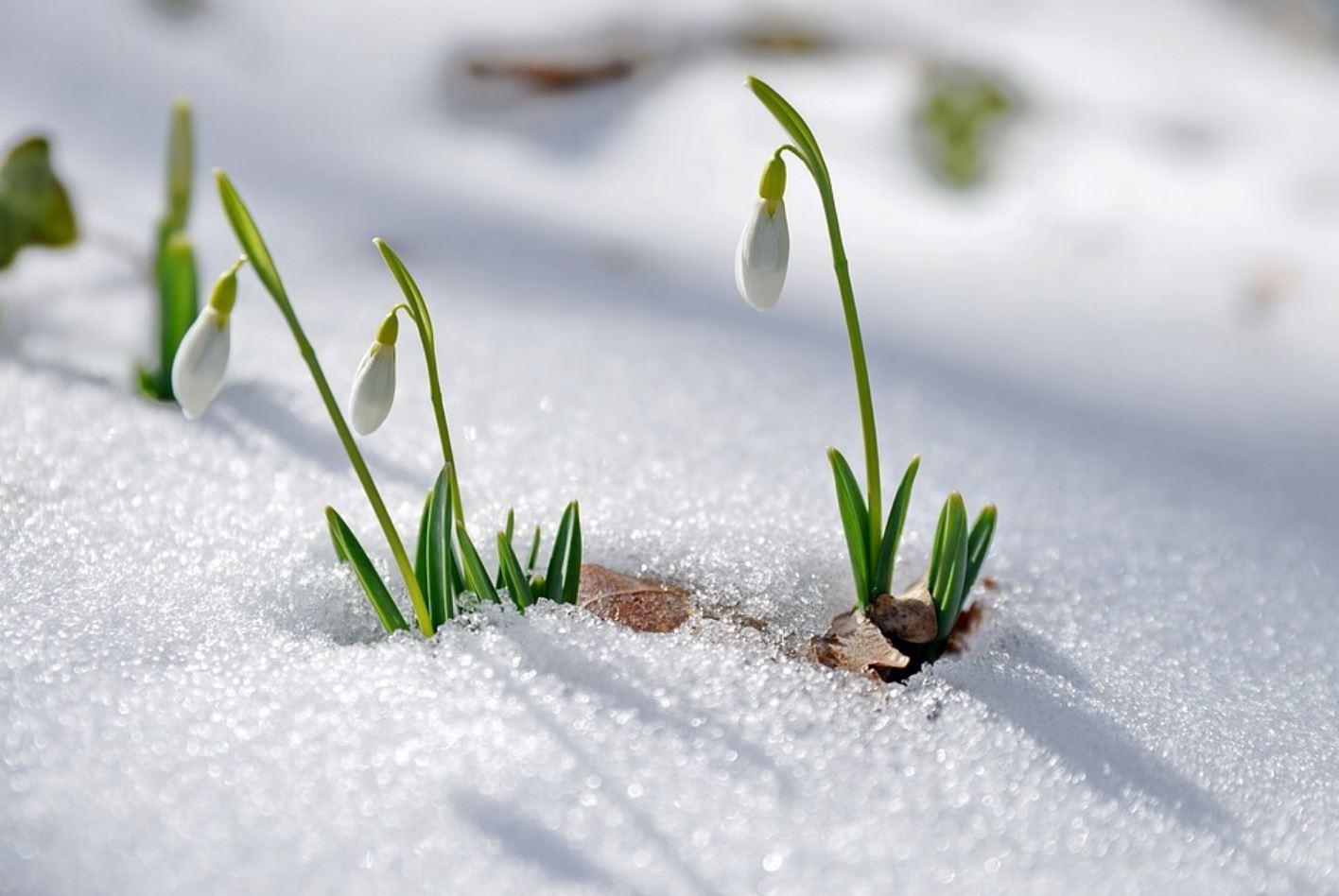 картинки весна природа (6)