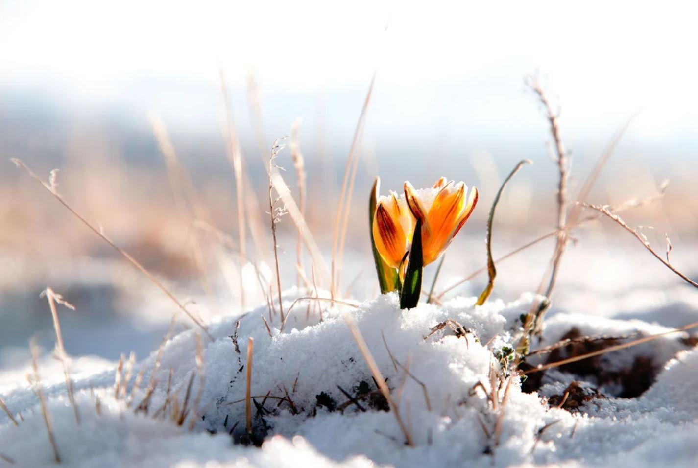 картинки весна природа (7)