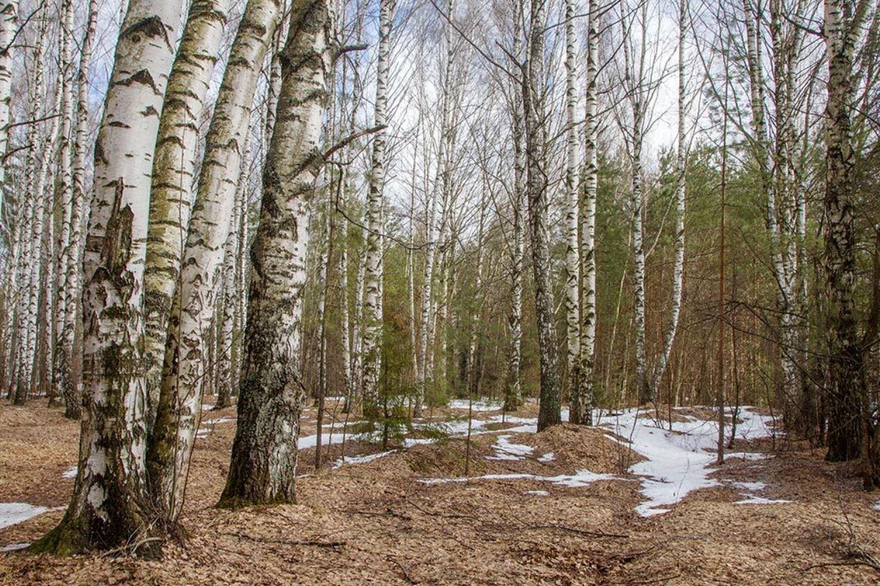 картинки весна природа (8)