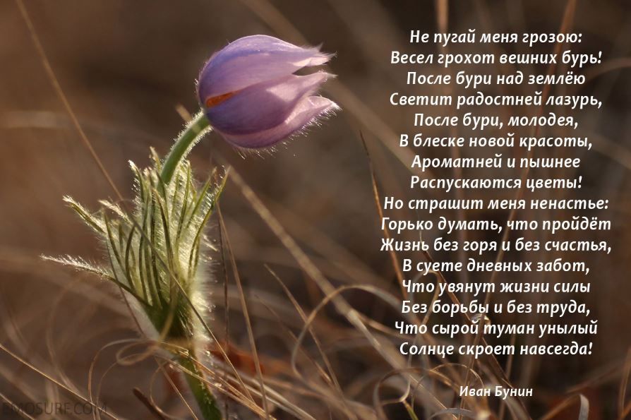 Стихи про весну (2)